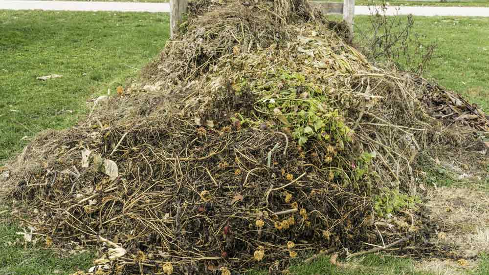 Image of green waste