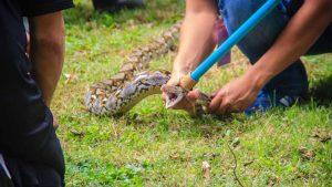 Snake - Memorable nature run-ins